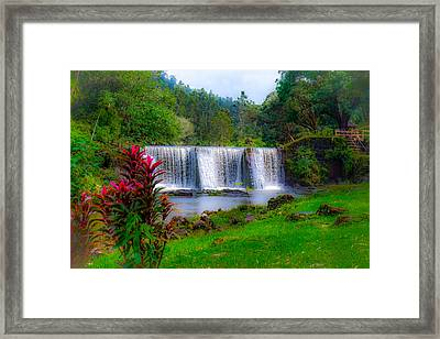 Heaven In The Woods Framed Print
