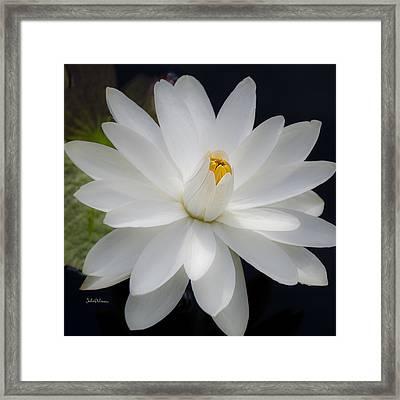 Heavenly Aquatic Bloom Framed Print