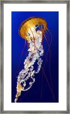 Heavenly Ascent Framed Print by Paula Marie deBaleau