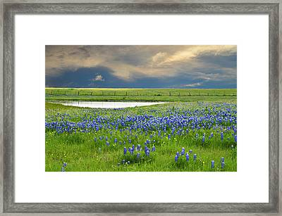 Heavenly Blues Framed Print