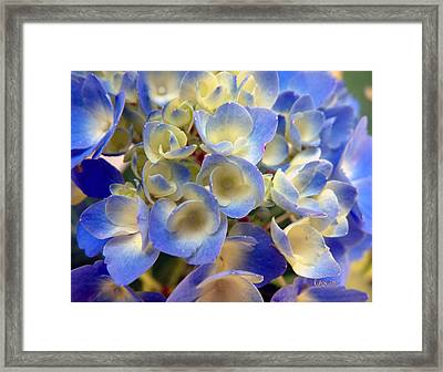 Heavenly Blues Framed Print by RC deWinter