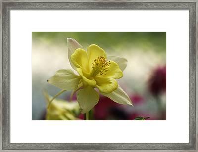 Heavenly Framed Print