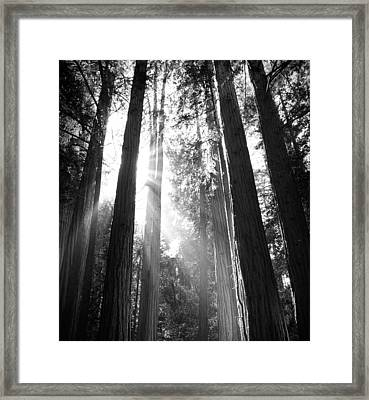 Heavenly Forest Framed Print