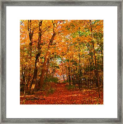 Heavenly Pathway Framed Print by James Hammen