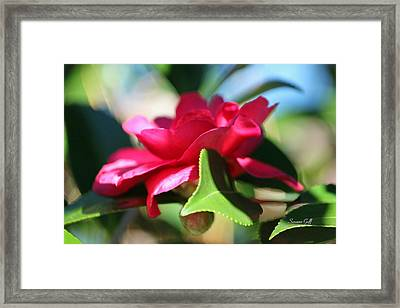 Heavenly Perfection Framed Print by Suzanne Gaff