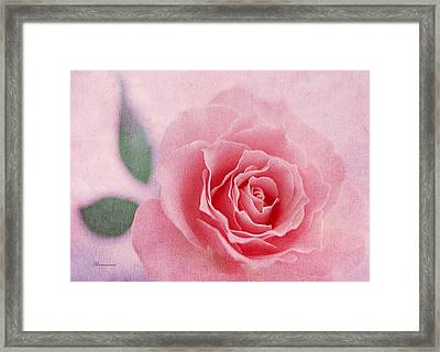 Heavenly Rose Framed Print by Georgiana Romanovna