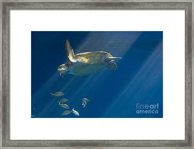 Heavenly Turtle Framed Print