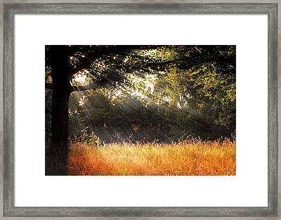 Heaven's Light Framed Print