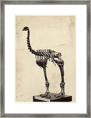 Heavy-footed Moa Framed Print