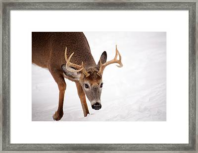 Heavy Rack Framed Print by Karol Livote