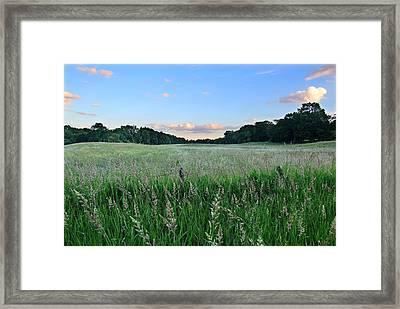 Hebron Field Framed Print by Andrea Galiffi