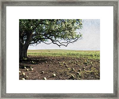 Hedgeapple Paradise Framed Print by Eric Benjamin