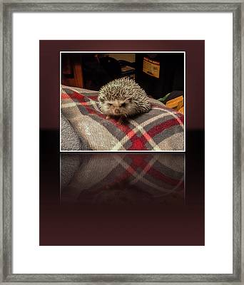 Hedgehog 5 Framed Print by Photographic Art by Russel Ray Photos