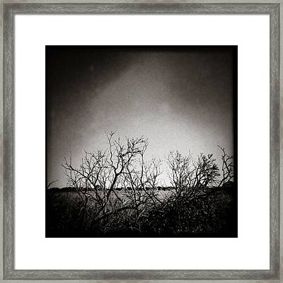 Hedgerow Framed Print by Dave Bowman