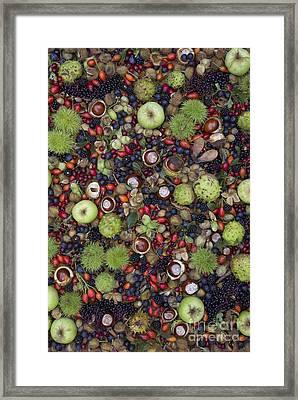 Hedgerow Harvest Framed Print