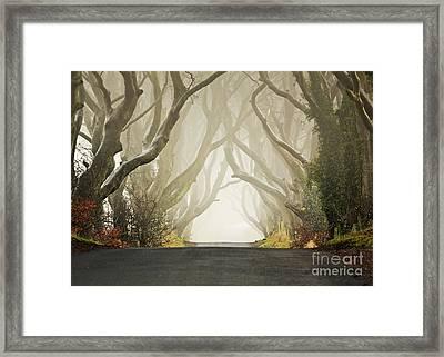 Hedges Framed Print by Pawel Klarecki