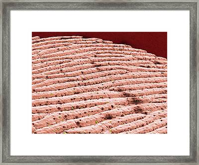 Heel Skin Framed Print by Thierry Berrod, Mona Lisa Production