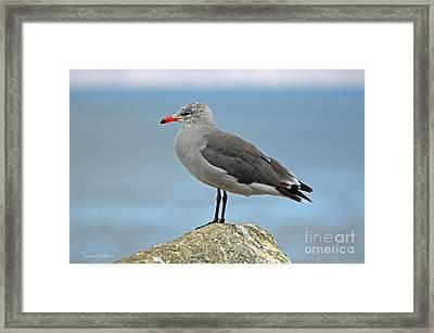 Heermann's Gull In Profile Framed Print