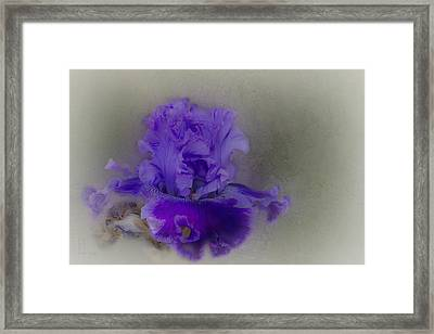 Framed Print featuring the photograph Heidi by Elaine Teague