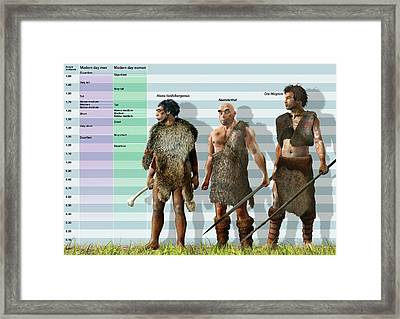 Height Variation In Pleistocene Hominids Framed Print