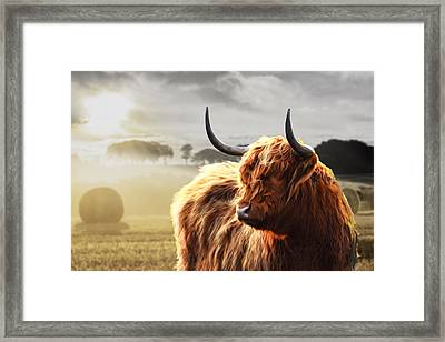 Heilan Coo On Fire Framed Print