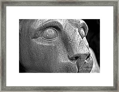 Heinz Warneke's Mountain Lion Framed Print