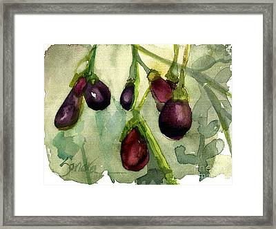 Heirloom Eggplant Framed Print by Sandra Stone