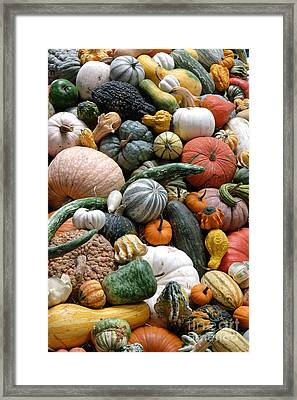 Heirloom Squash Tower V. Framed Print by Vinnie Oakes