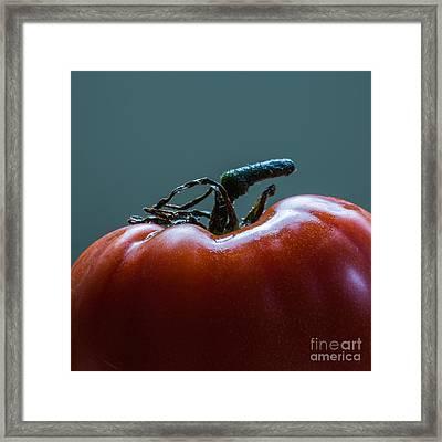 Heirloom Tomato Square Format Framed Print