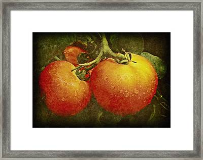 Heirloom Tomatoes On The Vine Framed Print