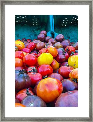 Heirloom Tomatoes V. 2.0 Framed Print by Dennis Reagan