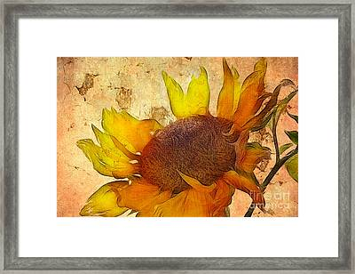 Helianthus Framed Print