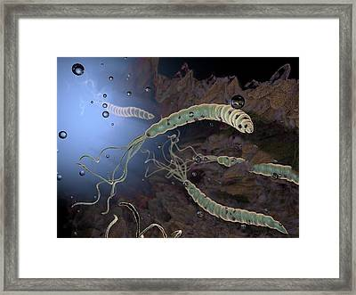 Helicobacter Pylori Bacteria Framed Print by Hipersynteza