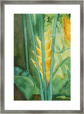 Heliconia Framed Print by Diane Cutter
