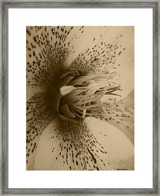 Helle 1 Framed Print by Kathy Spall