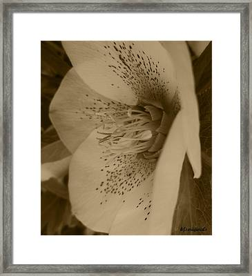 Helle 5 Framed Print by Kathy Spall