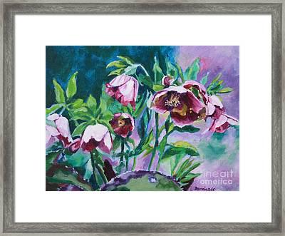 Hellebore Flowers Framed Print by Jan Bennicoff