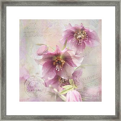 Framed Print featuring the photograph Hellebore by Sylvia Cook