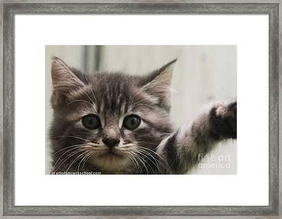 Hello Again Kitten Framed Print by PainterArtist FIN