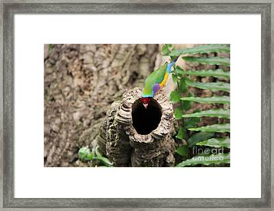 Hello... Anybody Home. Framed Print by Jackie Mestrom