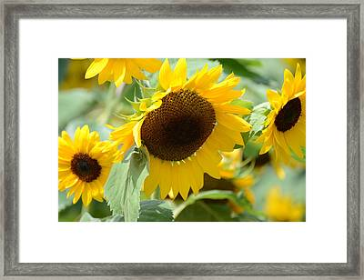 Framed Print featuring the photograph Hello Beautiful by Linda Mishler