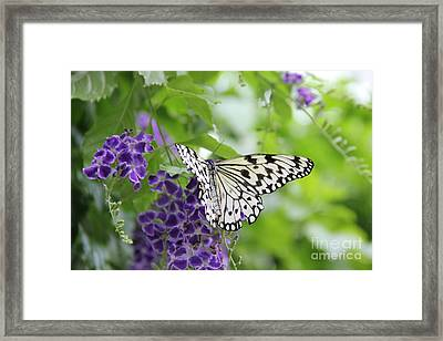 Hello Beauty Framed Print by Jackie Mestrom