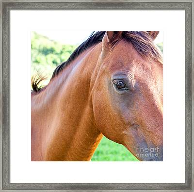 Framed Print featuring the photograph Hello Beauty by Roselynne Broussard