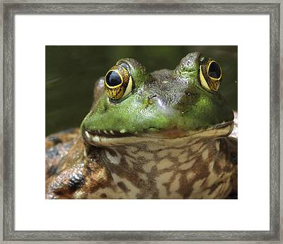 Hello Framed Print by Bruce  Morrell