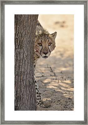 Hello Cheetah Framed Print by Andy-Kim Moeller