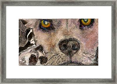 Hello Dog Framed Print