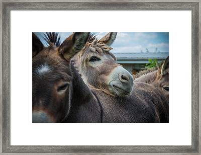 Hello Donkey Framed Print by Kristopher Schoenleber