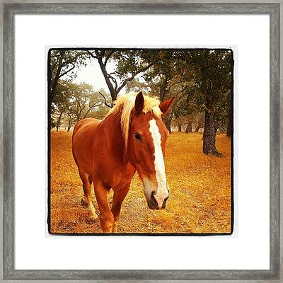 Hello Horse Framed Print