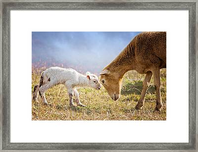 Hello I'm Your Mother Framed Print
