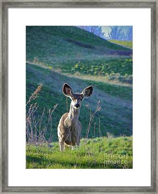 Hello Framed Print by KD Johnson